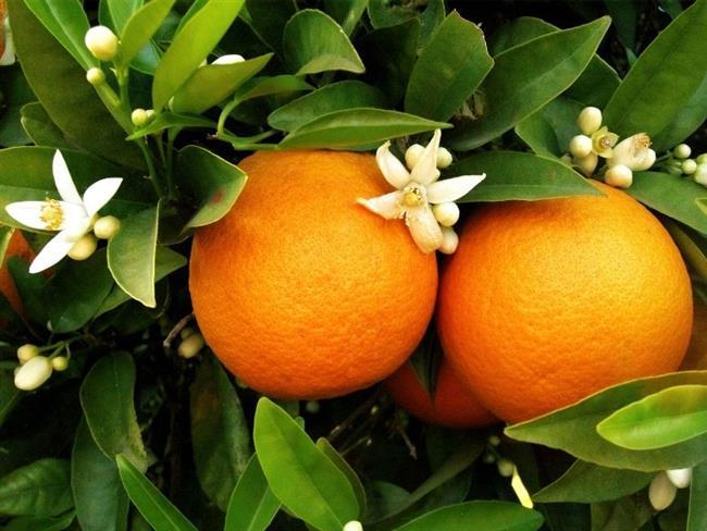 Portakal Kabuğu Koklayın:  Okurken bile çok ilginç bulduğunuza eminiz. Evet, çoğu araştırma bu yöntemin stres azaltıcı olduğuna işaret ediyor. Soyulmuş portakal koklamak ya da portakal kabuğunun kokusunu içinize çekmek stresin etkisini düşürüyor ve stresi azaltıyor. Bu sayede çok kısa zamanda kendinizi iyi hissedebiliyorsunuz.