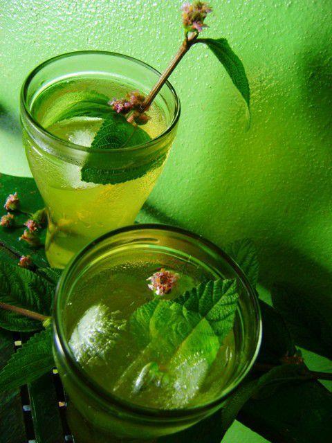 Bazı bitkiler vardır sizi rahatlatır ruhunuza sakinlik verir. İşte ruhunuza şifa olacak o mucizevi bitkiler...  Melisa Otu  Epilepsi yani sara hastalığı tedavisinde de kullanılabilir.Egzama gibi cilt hastalıkları, ciltte oluşan yaralar için de oldukça faydalıdır. Hipertansiyon yani yüksek tansiyon hastaları da bu bitkinin çayını içebilir ve tansiyonlarının düşmesine yardım edebilirler. Sakinleştirici olarak da kullanılır.