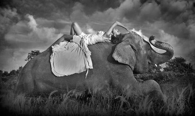 İnsan dişisi, katil balinalar ve filler yeryüzünde menopoza giren tek memelilerdir.