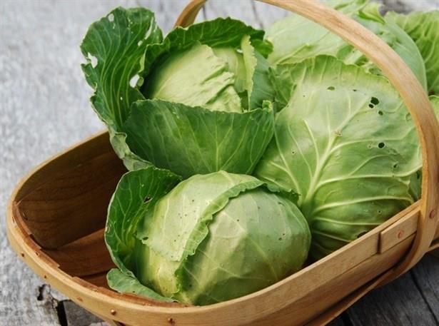Tok tutma ve toksinleri arındırma özellikleri beyaz lahananın diyet listelerinde yer almasını sağlıyor. 100 gramında 25 kalori bulunan beyaz lahana, salata, zeytinyağlı sebze yemeği ve çorba olarak tüketilebiliyor. Özellikle lahana çorbası tüketimi hem sıvı atımını sağlıyor hem de tok tutuyor. Özellikle kış aylarında beyaz lahananın sofralardan eksik edilmemesi gerekiyor. İçeriğinde C, B ve E vitaminlerinin yanı sıra demir, potasyum ve magnezyum minarellerini de içeren beyaz lahana, toksik maddelerin vücuttan atılmasını sağlıyor, antioksidan özelliğiyle pek çok hastalıktan koruyor.