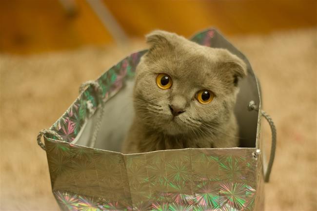 Kedilerin De Burcu Olur! - 11