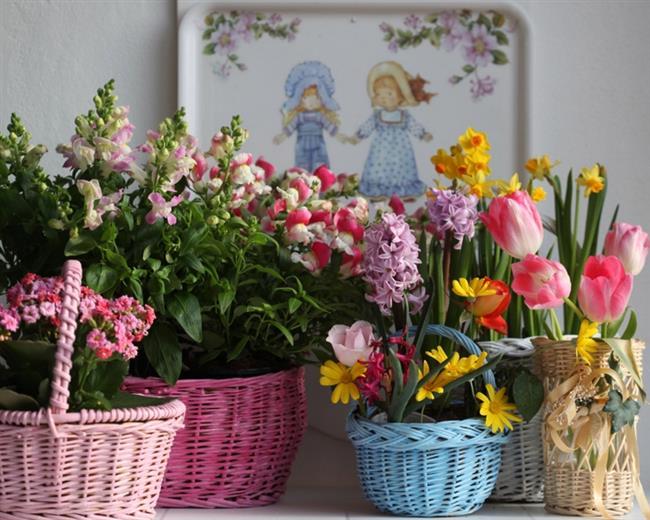 Çiçek Parlatma  Bitkilerinizin solgun görünümünü saç kremiyle engelleyebilirsiniz. Pamuk yardımıyla saç kremi sürüp yapraklarını ovalarsanız, bitkiniz göz alıcı şekilde parlayacaktır.