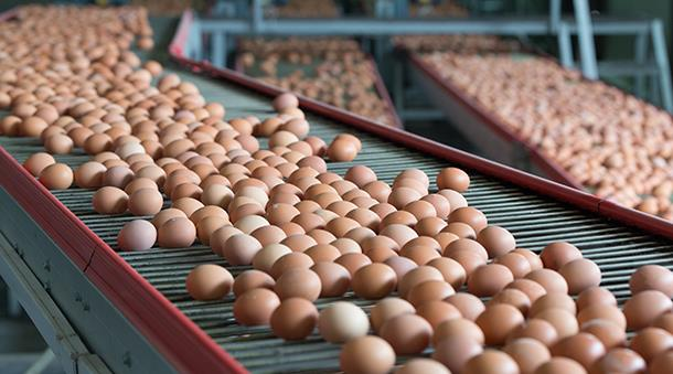 Business Insider'da yer alan habere göre; Amerika gıda endüstrisi her yıl 150 bin ton yumurta kabuğunu çöpe atıyor.