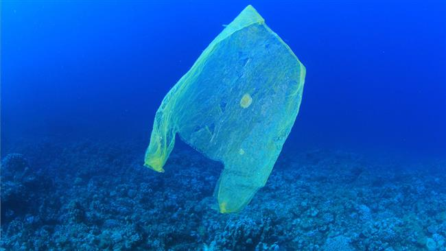 Peki Plastik Poşetler?  Plastik poşetler günlük yaşantımızda en sık kullandığımız malzeme haline gelmiş durumda. Marketlerden, pazarlardan aldığımız plastik poşetler ciddi bir şekilde çevre kirliliği oluşturuyor. Bu nedenle geri dönüşüm ülkemizde de önem kazanmaya başladı. Belediyeler bir çok bölgeye kağıt, cam ve plastik konteynırları koyuyor. Bu konuda bilinçli olursak kendi hayatımızı ve hayvanların yaşamını korumuş oluruz. Eğer çevrenizde kağıt, cam ve plastik konteynırlar bulunmuyorsa, siz evinizde çöpleri bu şekilde sınıflandırarak ayırırsanız, çöp toplayıcılar bunları ilgili yerlere ulaştıracaklardır.