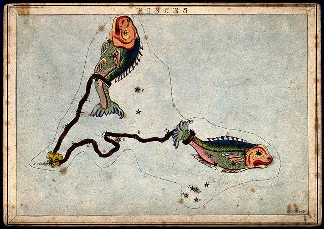 Balık: Mahsulat-ı derya