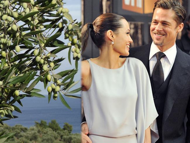 Angelina Jolie'nin, Brad Pitt'e Fransa'daki köşkleri için 18 bin 500 dolar değerinde 200 yıllık zeytin ağacı satın alması...