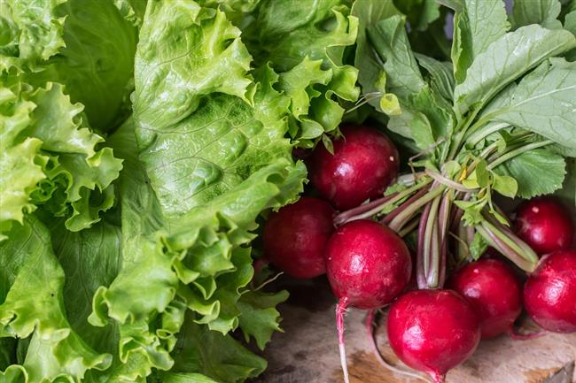 Bol vitamin deposu turp'un sağlık açısından birçok faydası bulunduğunu belirten Tutar, şu bilgileri verdi:  Her mevsim sofranızda yer alabilecek olan turp, yaz, kış ve sonbahar turpu olarak üç çeşittir. Ülkemizde genelde renklere göre çeşitlendirilmekte olup, en bilinenleri kırmızı ve siyah turptur. İçerdiği organik asitler nedeniyle keskin bir tada sahiptir. Bütün turp çeşitleri, antioksidan olarak bilinen flavonoidlerden zengindir. Karaciğer ve safra sağlığı açısından siyah turpu, antioksidan içeriği açısından kırmızı turpu tercih etmelisiniz.