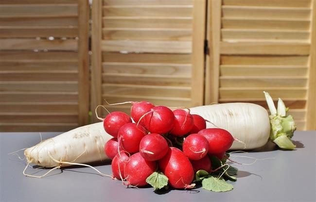 SAĞLIKLI KİŞİ İÇİN İDEAL PORSİYON:  Günde 1 kâse turp salatası olarak tüketmek yeterlidir. Turp, bürüksel lahanası, karnabahar, brokoli gibi sebzeler ile aynı soydan geldiği için bu sebzeleri tüketen kişinin aynı gün turp tüketmesine gerek yoktur.