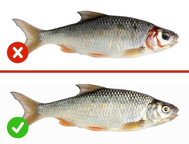 BALIK  Taze balıkların bulutlu gözleri olmamalıdır.Sağlıklı solungaçlar daima parlak kırmızı renkte olmalıdır.Cildinde doğal olarak metalik bir ışıma olmalı ve teraziler vücuda sıkıca bağlanmalıdır.