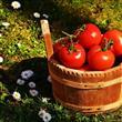 Eylül Ayı Meyve Ve Sebzeleri! - 12