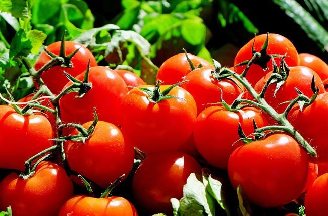 Domates  Kahvaltıların ve salataların olmazsa olmazı kabul edilen domates, günün tüm beslenme vakitlerine dahil edilmesi gereken besinlerden. Çünkü domatesin, içerdiği yüksek C vitamini ile cildi diri tutmanın anahtarı olabileceği söylenebilir. Domates ayrıca sahip olduğu likopen ile güneşin zararlı UV ışınlarına karşın da kalkan görevi üstlenir.