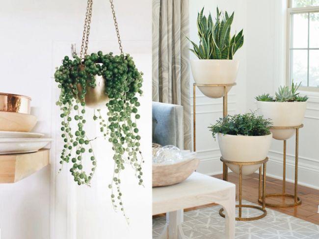 Evinizde bulundurduğunuz bitkiler sadece dekorasyon amaçlı değil aynı zamanda sağlığınız içinde oldukça önemli.Saksılarda yetiştireceğiniz çiçeklerle, sağlıklı ve doğayla iç içe bir ev ortamında yaşamak mümkün.Sizler için derlediğimiz bu 7 bitki evinize ve size çok iyi gelecek!  Kaynak Fotoğraflar:Google Yeniden Kullanım,Pixabay,Pinterest