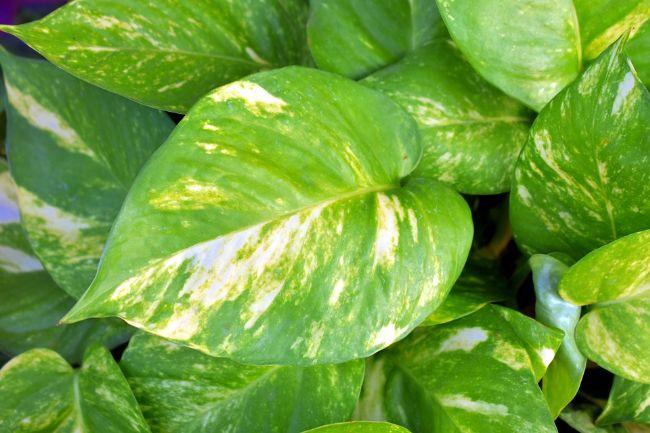 Evinizde Bitki Bulundurmanız İçin 7 Neden - 8