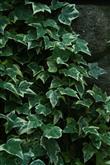 Evinizde Bitki Bulundurmanız İçin 7 Neden - 7