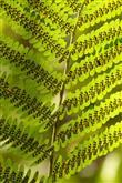 Evinizde Bitki Bulundurmanız İçin 7 Neden - 3