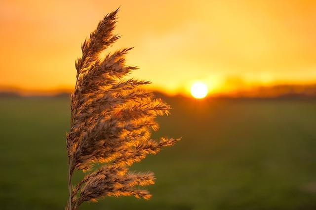"""Güneş ışınlarına uzun süre maruz kalmayın.  <a href=  http://mahmure.hurriyet.com.tr/foto/diyet-fitness/yag-yakan-ev-yapimi-7-icecek-tarifi_42568/  style=""""color:red; font:bold 11pt arial; text-decoration:none;""""  target=""""_blank"""">  Yağ Yakan Ev Yapımı 7 İçecek Tarifi"""