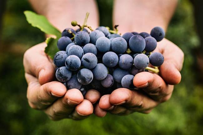 İSPANYA  İspanya'da her ay başı 12 üzüm yemenin bütün yıl şans getireceğine inanılıyor. Bu nedenle her ay saat tam 12'de 12 üzümü afiyetle mideye indiriyorlar.