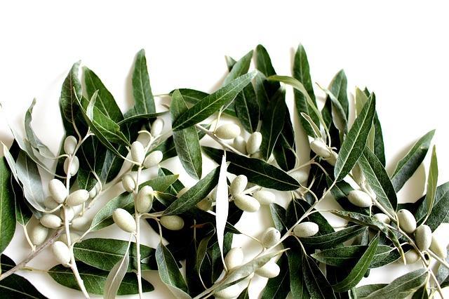 """Zeytin yaprağı  Erken yaşlanma belirtilerinin önüne geçen zeytin yaprağı, serbest radikallere karşı savaşan bir besin. Antimikrobiyal özelliklere sahip olan zeytin yaprağı aynı zamanda iltihap söktürücü ve ağır kesici özellikleri ile de şifa dağıtıyor.  <a href= http://mahmure.hurriyet.com.tr/foto/saglik/saglik-kalkani-baharatlar_42773 style=""""color:red; font:bold 11pt arial; text-decoration:none;""""  target=""""_blank""""> Sağlık Kalkanı Baharatlar"""