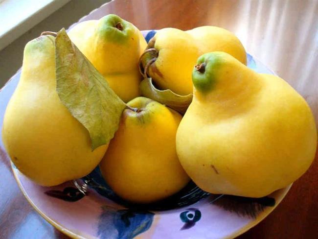Soğuk kış mevsiminde bağışıklık sistemini güçlendirmede meyvelerin elbette ki payı çok büyük. Ayvanın A, B, C vitamini ve potasyum bakımından zengin yapısıyla kanserden bağırsak rahatsızlıklarına, eklem ağrılarından öksürüklere kadar birçok hastalığa iyi geliyor.  Kaynak Fotoğraflar:Google Yeniden Kullanım