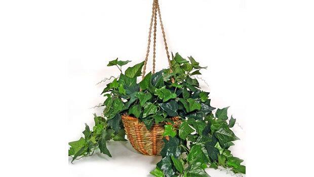 Evinize Sağlık Getirecek Bitkiler - 2