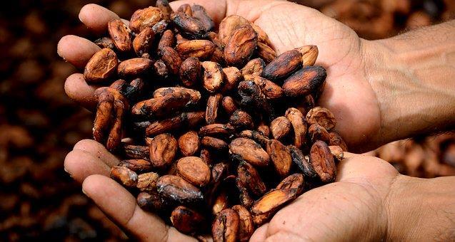 Kakao yağı, doğru bir şekilde ve miktarda kullanıldığında bilinen ciddi bir zararı bulunmuyor. Ancak kakao yağı, doymuş yağ içerdiğinden kakao yağı ile hazırlanan yiyecekler çok fazla yendiğinde kalori ve yağ olarak dönebiliyor. Bu nedenle içinde kakao yağı bulunan yiyecekleri aşırıya kaçmadan tüketmek büyük önem taşıyor. Aynı şekilde fazla tüketilmesi hazımsızlık, uykusuzluk gibi sorunlara da neden olabiliyor. Kaynak: yemek.com
