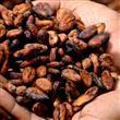 Kakao Yağının Mucizevi Faydaları - 8