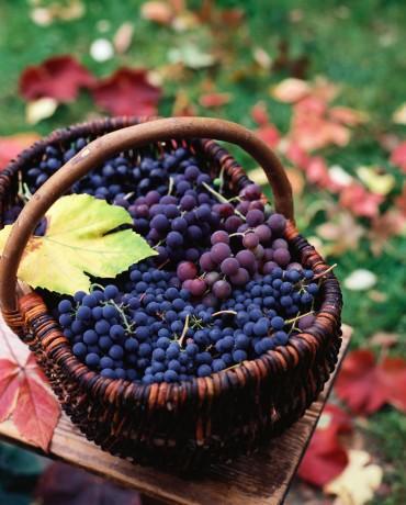- Bol antioksidan almak için en canlı ve koyu renkli meyve ve sebzeleri seçin. En canlı renkli portakal, ıspanak ve marullar bol beta karoten ve lutein, en kırmızı üzümler, en kırmızı ve sarı soğanlar bol quersetin içerirler.  - Yeterince lifli gıda yememekle bağlantılı bulunmuş olan hastalıklar şunlardır: Kabızlık, apandisit, bağırsak kanseri, spastik kolit, mide fıtığı, bacak varisleri, hemoroid, koroner damar hastalığı, yüksek kan basıncı, safra kesesi taşları, diabet, obezite, ülseratif kolit.   - Yulaf ezmesi, kuru fasulye, elma, havuç, greyfrut, mercimek, yeşil biber, kuşkonmaz, tatlı patates çok lifli gıdalardır. Kabukları soyulmadan yenen tüm meyve sebzeler, buğday, fındık, fıstıklar iyi birer lif kaynağıdır.