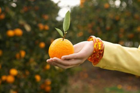 Portakal  * Soğuk algınlığı ve gripten korunmaya yardım eder * İçerdiği C vitamini ve folik asit sayesinde öksürüğü azaltır * Kalp hastalığı ve felçten korur * Ezik ve çürüklerin daha çabuk iyileşmesini sağlar * Mide ve pankreas kanserini önleyici etkisi vardır * Tansiyonun dengelenmesine yardımcı olur * İçindeki potasyum cildin kuruyup kırışıklıkların oluşması önler * Bağırsak gazlarını söker,bağırsak parazitlerinin dökülmesini sağlar * Karaciğerin düzenli çalışmasını sağlar * Safra salgısını arttırır (1 adet portakal=60 kalori)