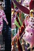 Dior'un orkidelerden esinlendiği koleksiyonu - 1