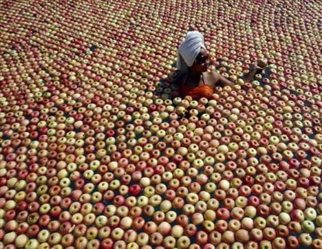 Elma parçaları ve elma sirkesiyle yapılan elma banyosunun ise cilt bakımı, saç bakımı, sivilce, ciltteki lekeler, şişmanlık, varis tedavisine iyi geldiği ifade edilmektedir.